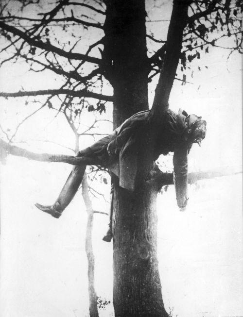 Картинки дерево для семьи хвощ имеет